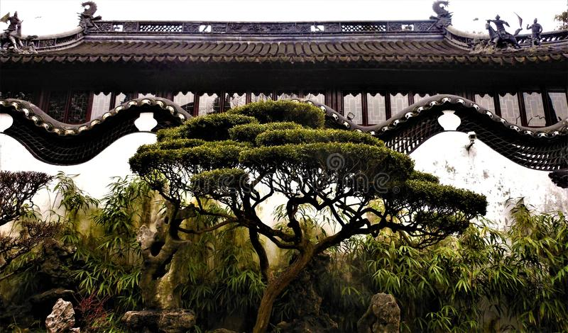 Chinese traditional building, history, time and art. Chinese traditional building, tradition, history, time, art, architecture, nature and tree, sky and royalty free stock image