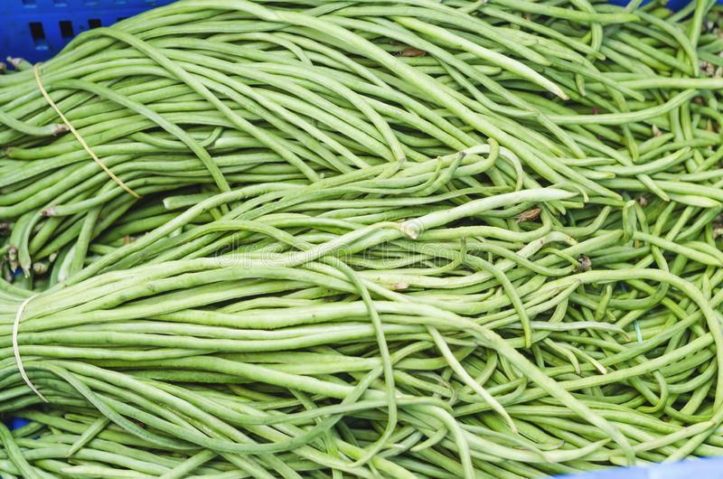 Chinese vainitas long beans for retail sale. In a market stock photography