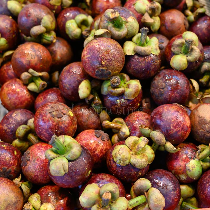 Chinese water chestnuts - Eleocharis dulcis royalty free stock images