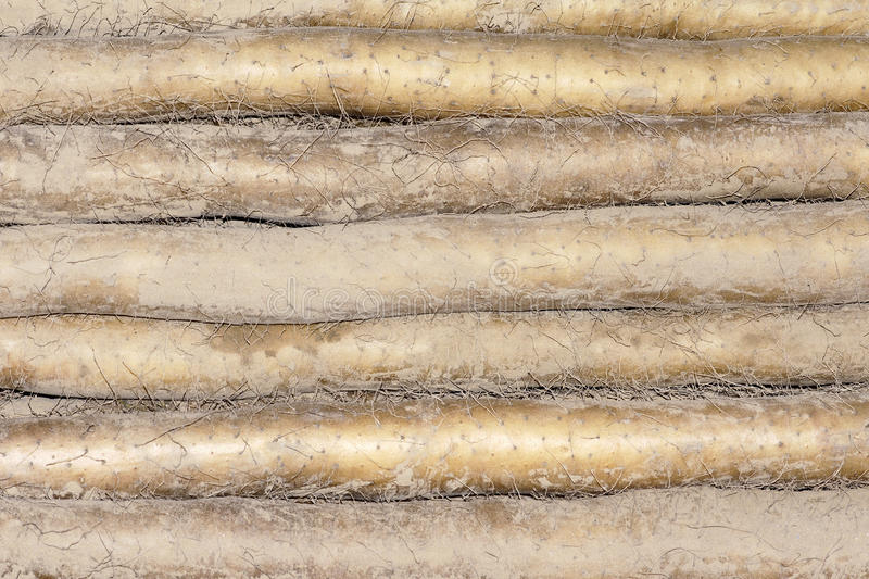 Download Chinese yam stock image. Image of food, long, fresh, crop - 21646319
