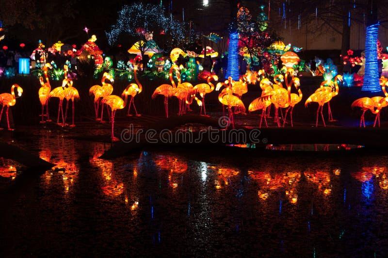 Chinesische Flamingo-Laternen reflektiert in einem Teich stockbilder