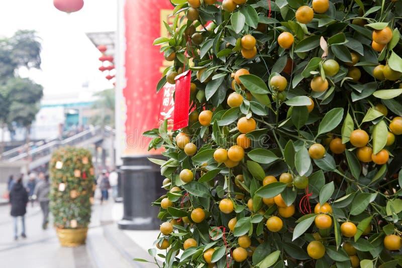 Chinesische japanische Orange des neuen Jahres lizenzfreie stockfotografie
