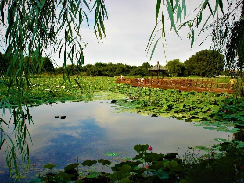 Chinesische Landschaft, Lotos, Trauerweide und See stockfoto