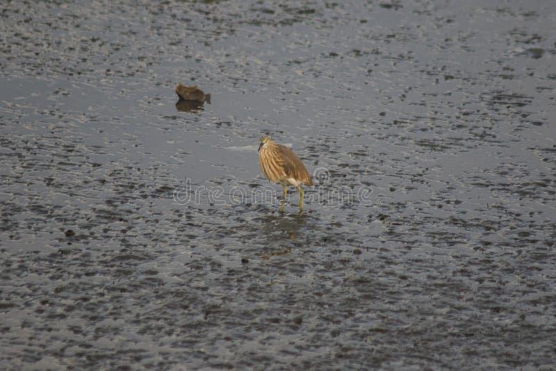 Chinesische Teich-Reiherstellung auf dem Boden stockbild
