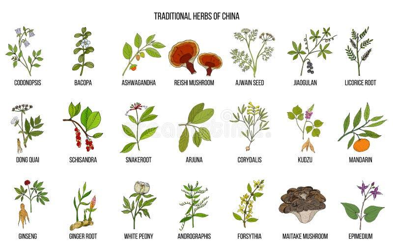 Chinesische traditionelle medizinische Kräuter stockfoto