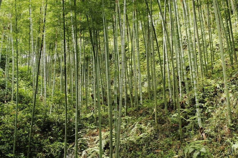 chinesischer Gebirgswald lizenzfreies stockfoto