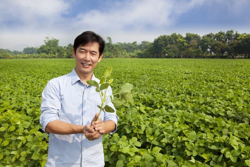 Chinesischer Landwirtholdingschößling stockfotos