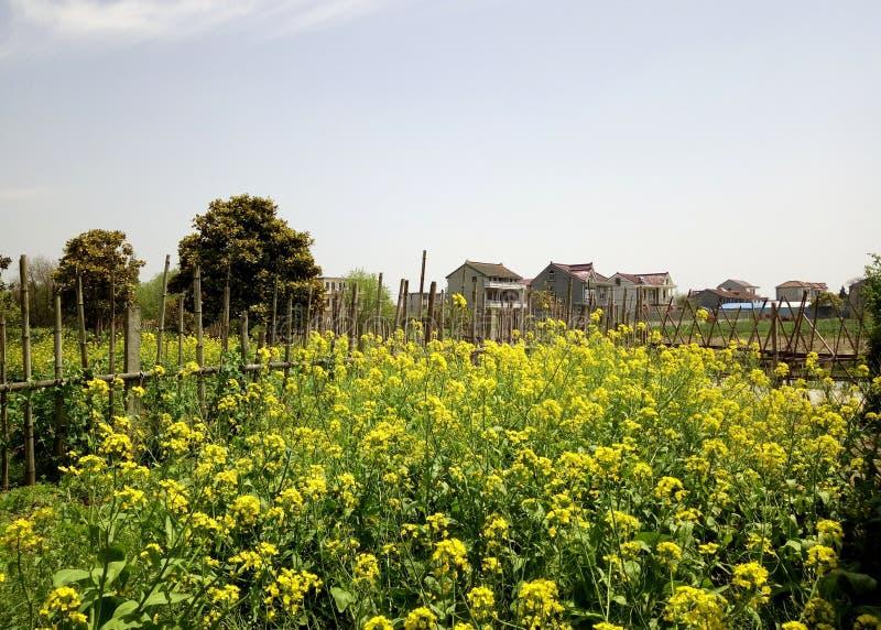Chinesisches Süddorfvergewaltigungs-Blumenfeld lizenzfreies stockbild