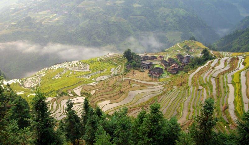 Chinesisches Terrassefeld 4 stockbilder
