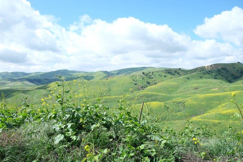 Chino- Hillswildflowers stockbilder
