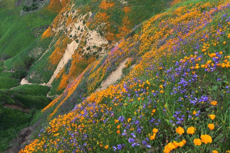 Chinoheuvels Wildflower stock foto's