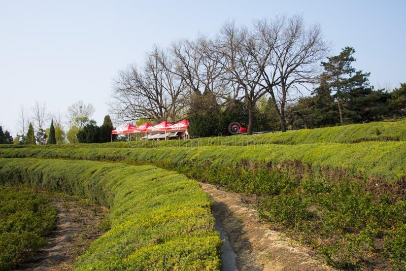Chinois de l'Asie, jardin botanique de Pékin, ceinture de ŒGreen de ¼ de sceneryï de ressort photos stock