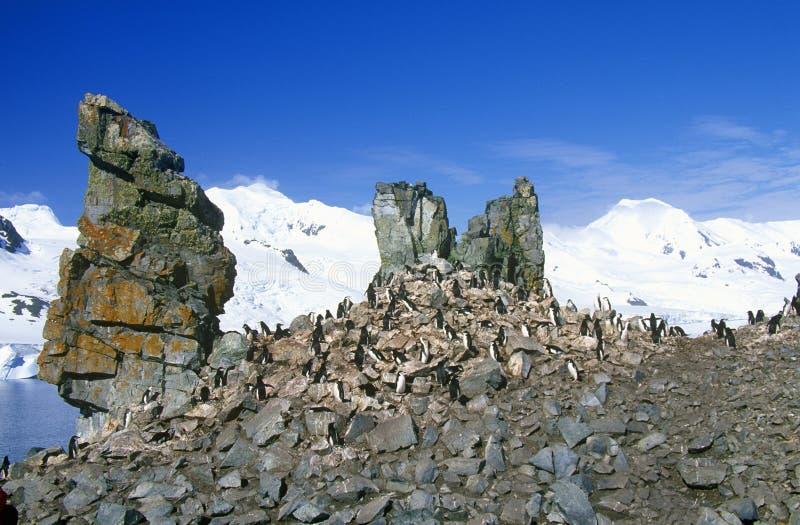 Chinstrap企鹅(Pygoscelis南极洲)在半月岛,布兰斯菲尔德海峡,南极洲 库存照片
