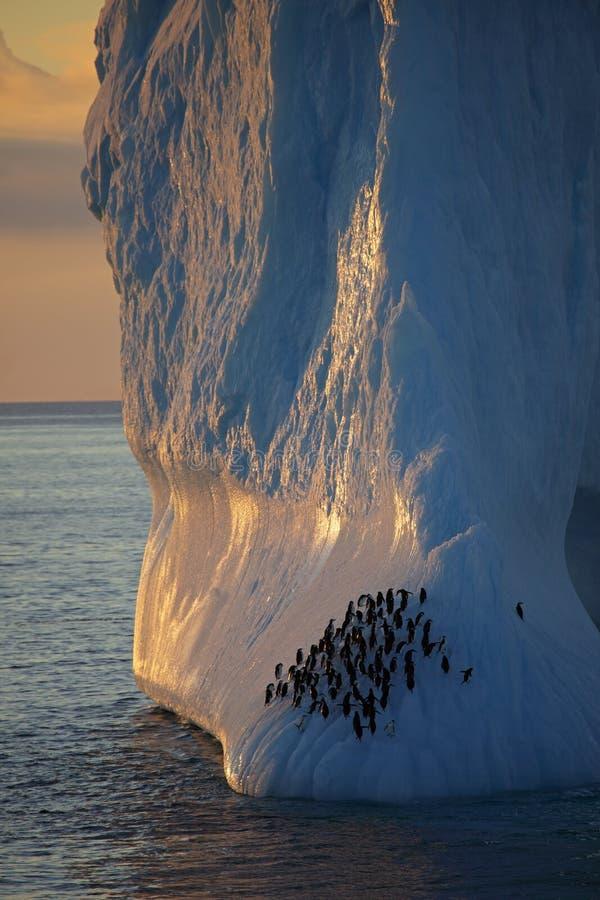 Chinstrap penguins resting on iceberg, Antarctica. Chinstrap penguins, Antarctic Peninsula, Antarctica stock photography