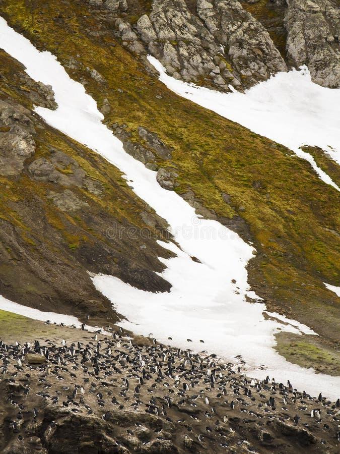Chinstrap pingvinkoloni på det Baily huvudet, Antarktis royaltyfri bild