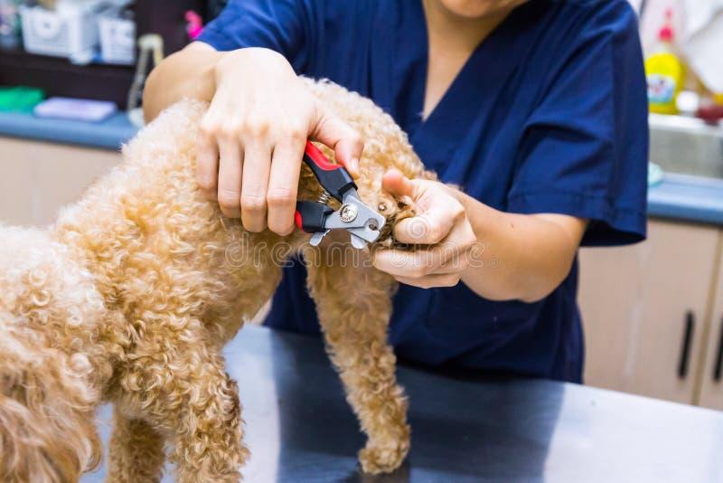 Chiodi del cane del taglio della disposizione del veterinario alla clinica immagini stock libere da diritti