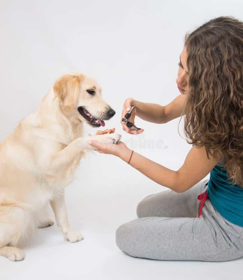 Chiodi del cane di taglio della donna isolati su fondo bianco fotografia stock libera da diritti