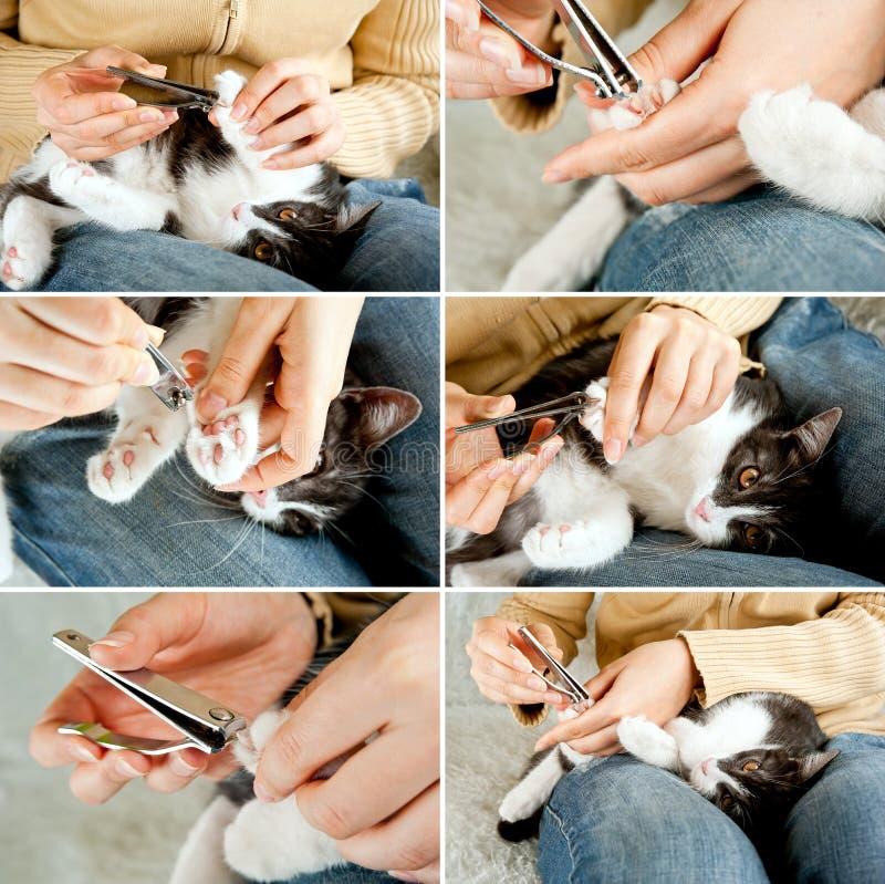Chiodi del gatto della guarnizione fotografia stock