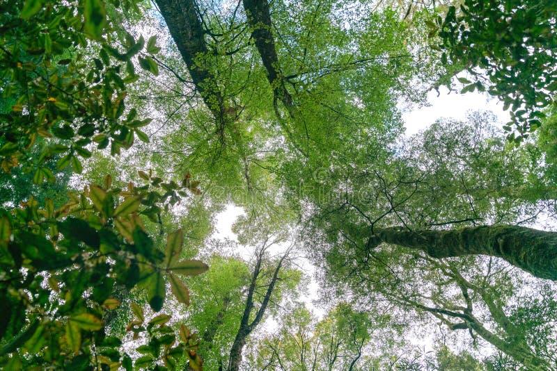 Chioma forestale qui sopra fotografia stock