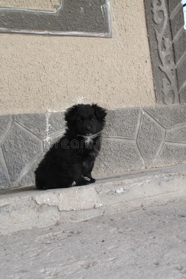 Chiot photo stock