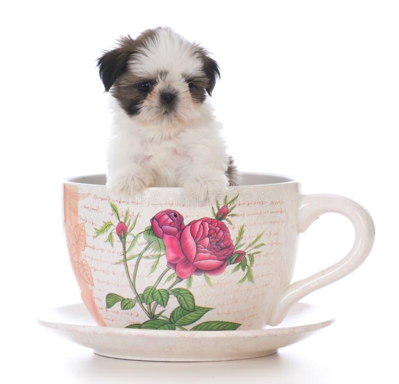 chiot adorable de tzu de shih dans une tasse de thé photo libre de droits