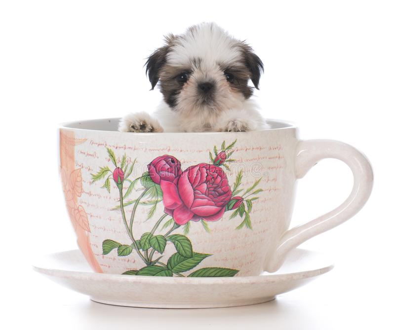 chiot adorable de tzu de shih dans une tasse de thé photographie stock libre de droits