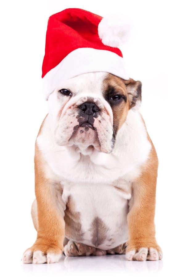 Chiot anglais soupçonneux de bouledogue de Santa photo stock