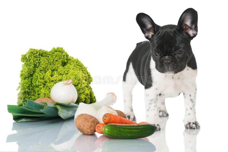 Chiot avec des légumes images libres de droits