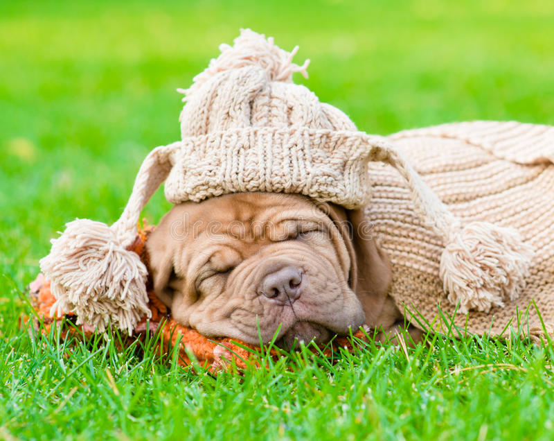 Chiot avec le chapeau drôle dormant sur l'herbe image stock