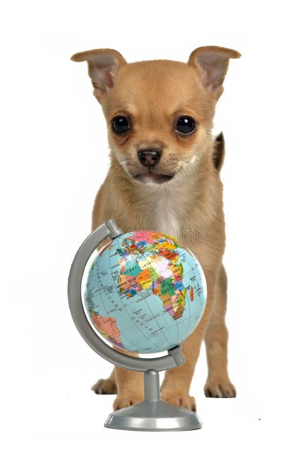 Chiot avec le globe photos libres de droits