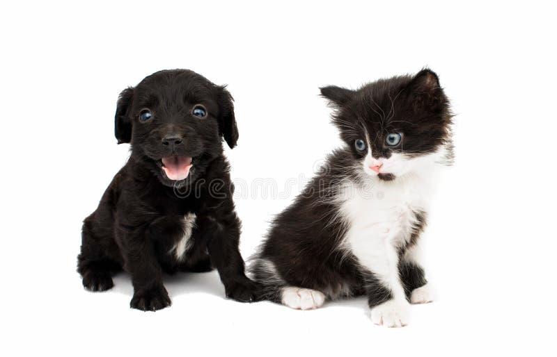 Chiot avec un chaton photo stock
