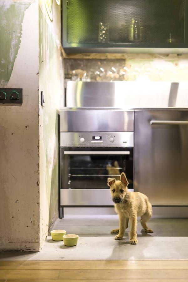 Chiot dans la cuisine dans le style de grenier photo stock