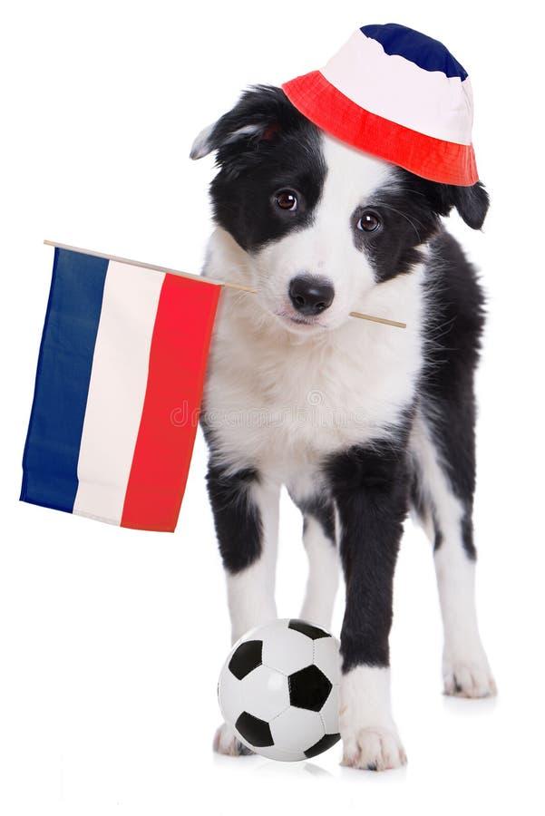 Chiot de border collie avec le drapeau, le chapeau et le ballon de football français photos libres de droits