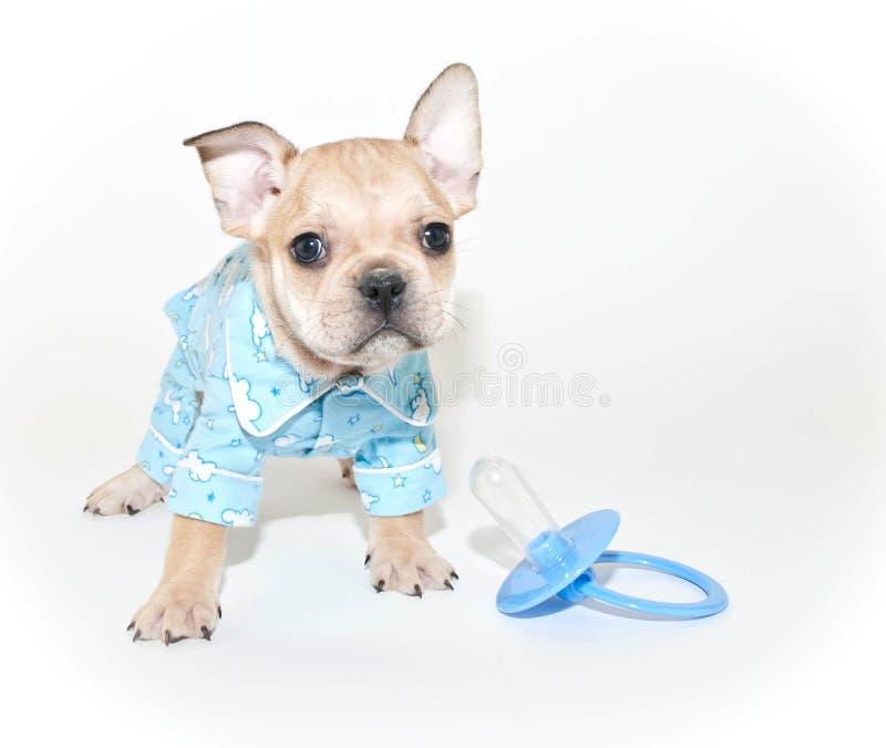 Pyjamas de port de chiot de bouledogue français photo stock
