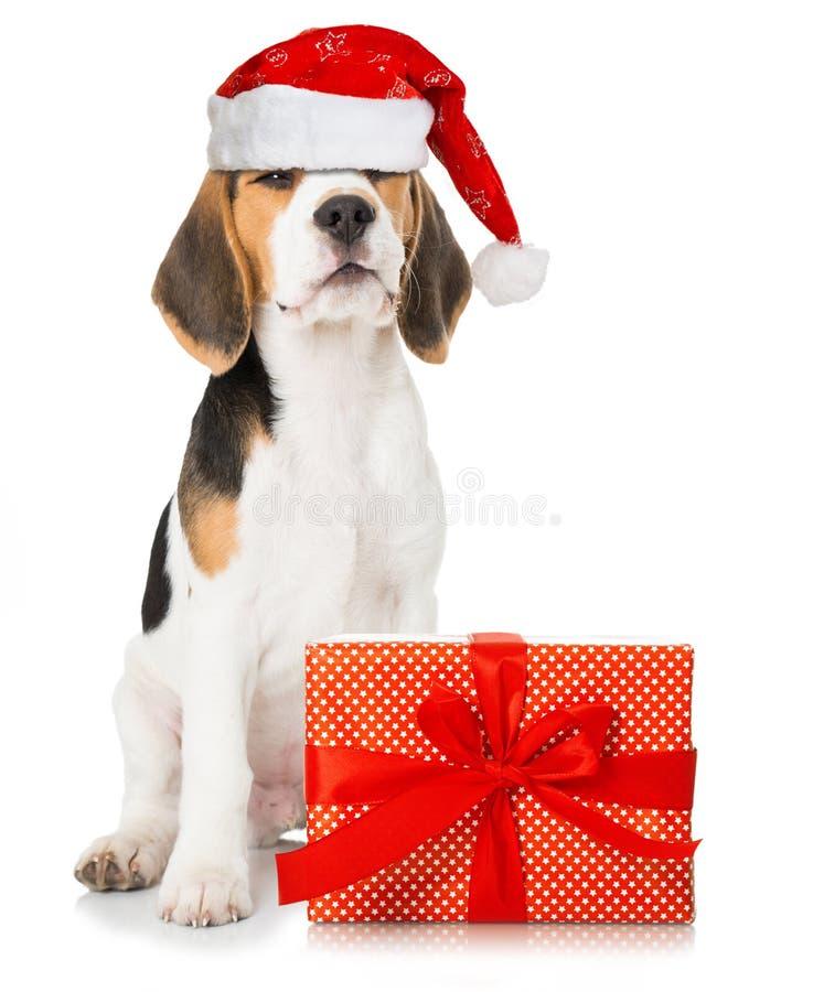 Chiot de briquet avec le chapeau rouge de Santa et un cadeau de Noël photographie stock libre de droits