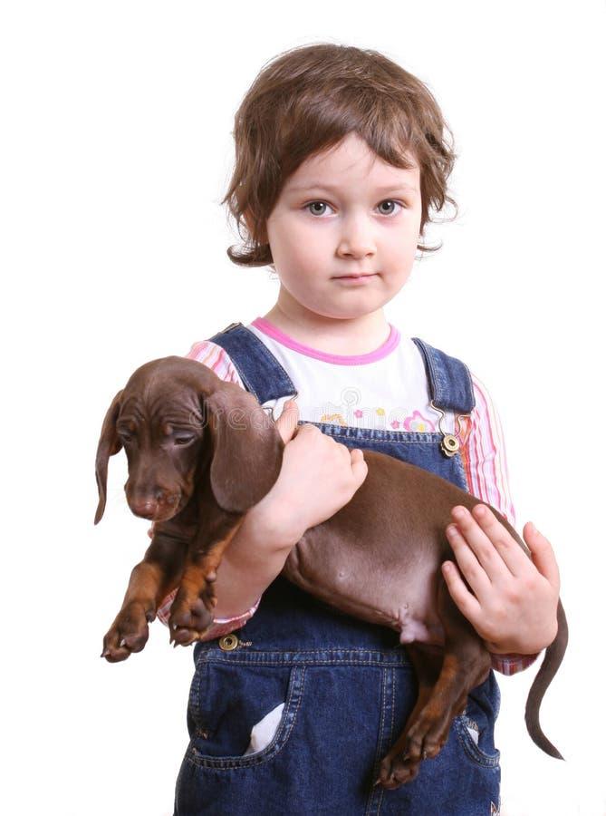 chiot de fille de dachshund petit images stock