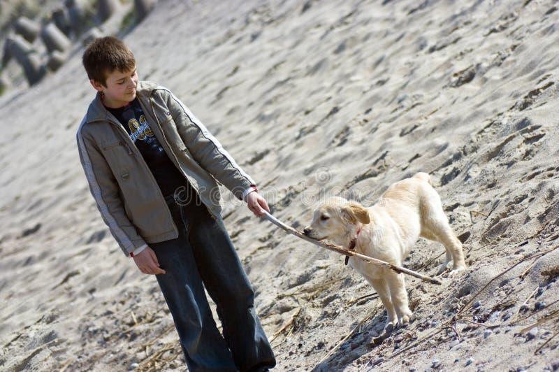 Chiot de garçon et de chien d'arrêt d'or photo stock