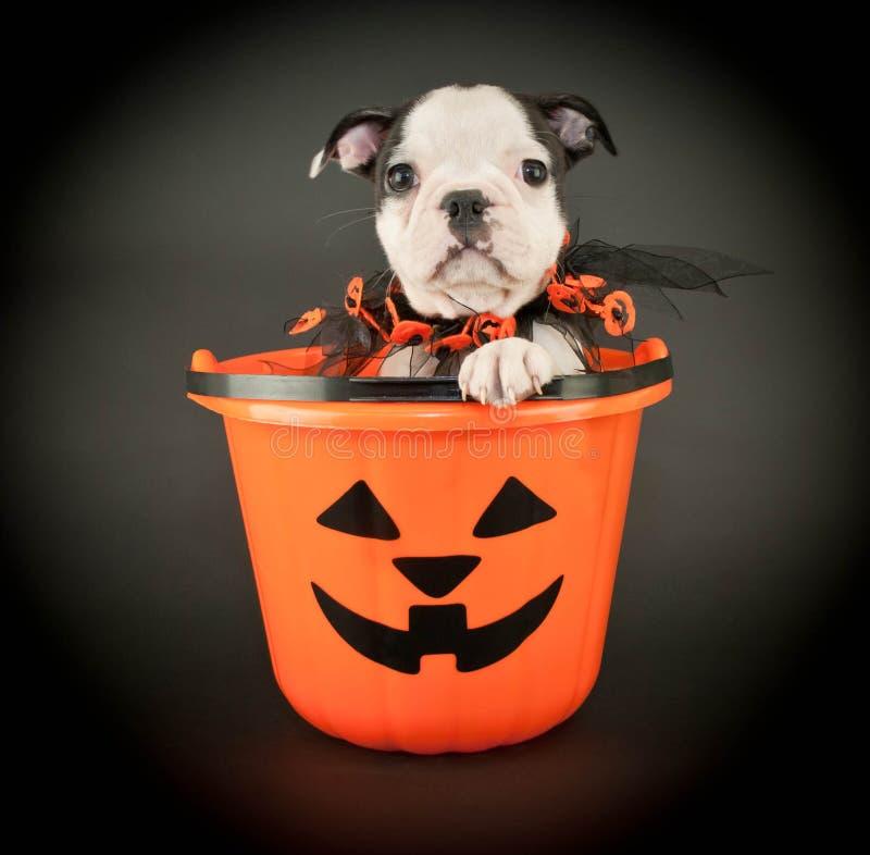 Chiot de Halloween photographie stock libre de droits