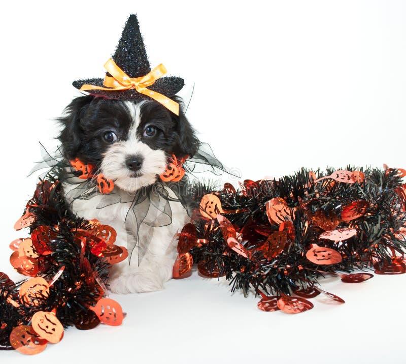 Chiot de Halloween photos stock