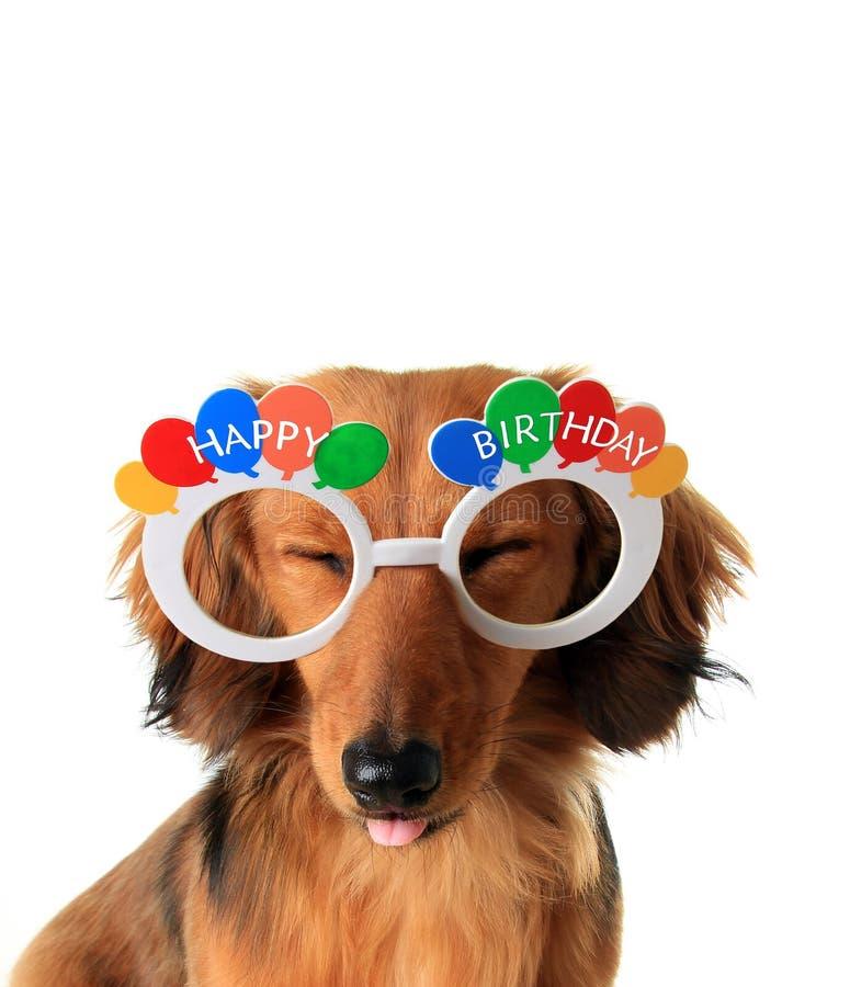 Chiot de joyeux anniversaire image stock