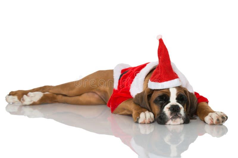 Chiot de Noël images libres de droits