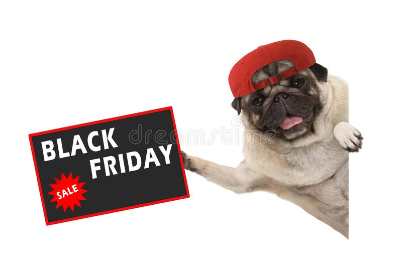 Chiot de roquet de Rolic avec le chapeau rouge, retardant le signe de vente avec le texte Black Friday, pendant en longueur de la photo stock