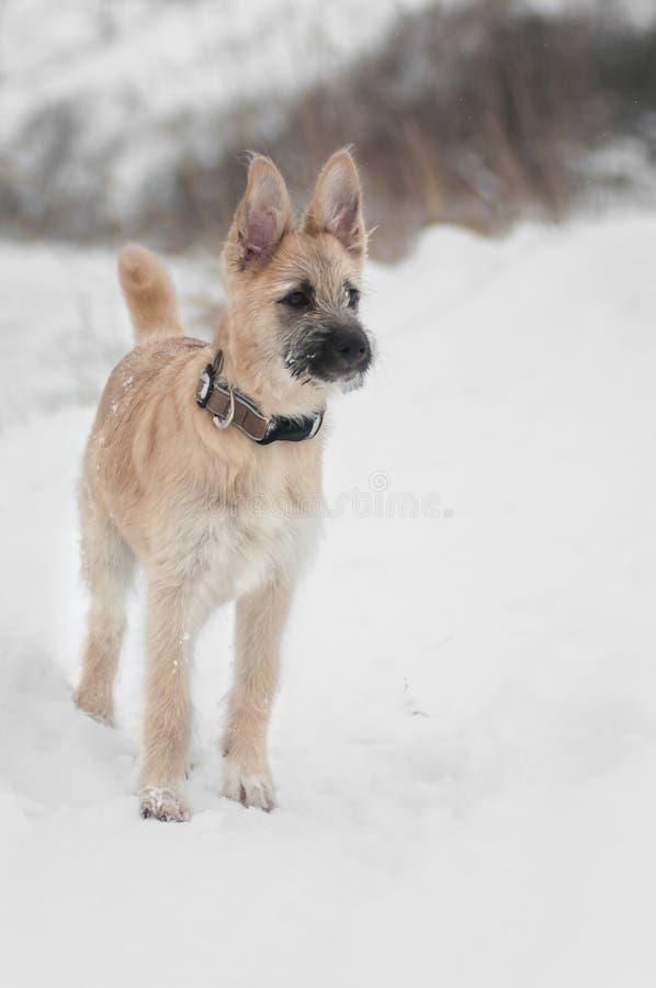 Chiot drôle de chien sur la forêt de neige photo libre de droits