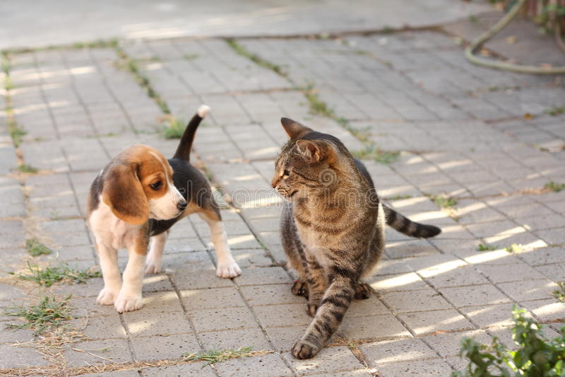 Chiot et chat de briquet photographie stock libre de droits