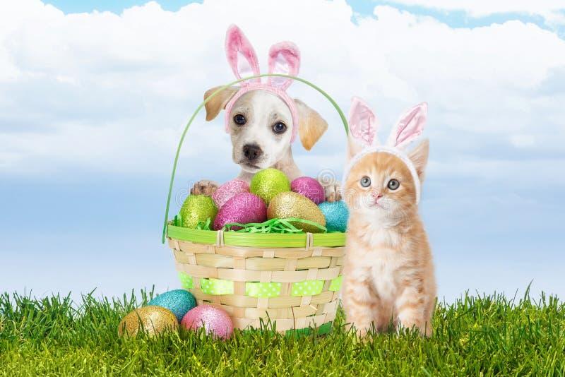 Chiot et Kitten With Easter Basket photos libres de droits