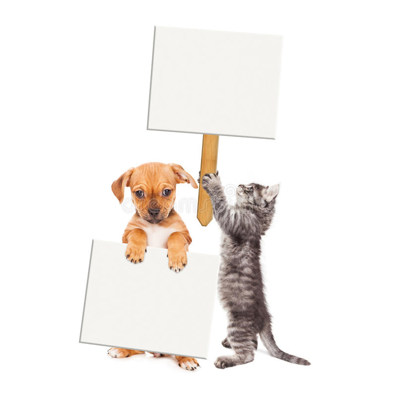 Chiot et Kitten Holding Blank Signs images stock