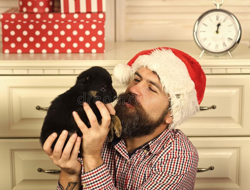 Chiot heureux de baiser d'homme de Noël Nouvelle année de chien photographie stock libre de droits