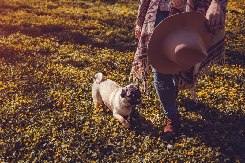 Chiot heureux de marche de forêt de chien de roquet de femme au printemps fonctionnant parmi les fleurs jaunes pendant le matin C image stock