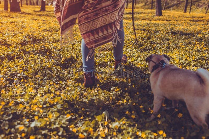 Chiot heureux de marche de forêt de chien de roquet de femme au printemps fonctionnant parmi les fleurs jaunes pendant le matin C photos libres de droits