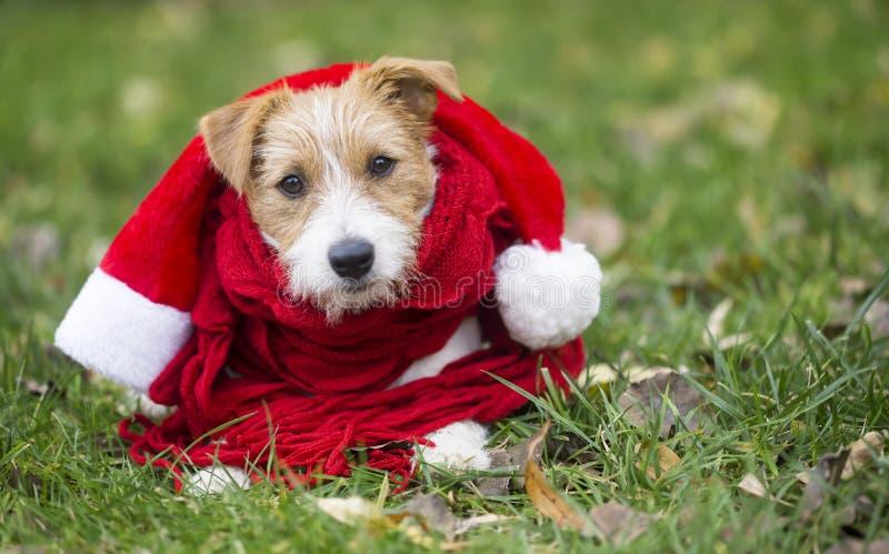 Chiot heureux mignon de chien utilisant le chapeau de Santa et l'écharpe rouge photos libres de droits